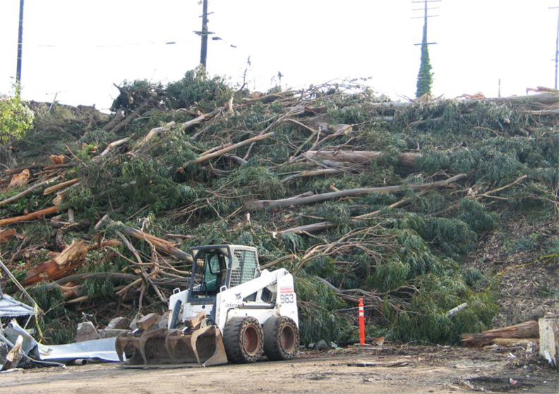 Hunters-Point-Shipyard-tree-massacre-2005-by-SF-Tree-Council, REJECT Lennar's toxic EIR!, Local News & Views