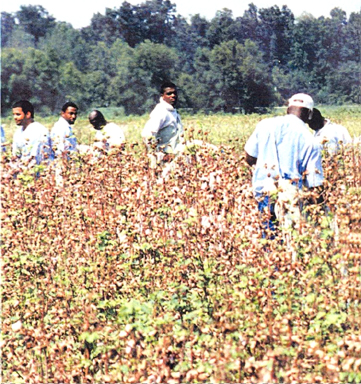 What has changed since slavery days at Angola, Louisiana? Blacks are still forced to work the fields of this 18,000-acre plantation turned prison. And freedom fighters live on in the dungeon. Black Panthers Herman Wallace and Albert Woodfox have been locked in solitary for nearly 37 years in Angola.