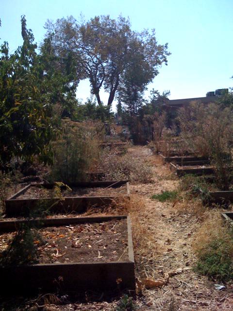 castlemont-high-school-garden, Wanda's Picks for Jan. 16, Culture Currents