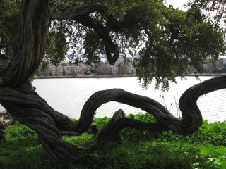 """In a series of photos I call """"Open Space"""" taken Thursday at Lake Merritt in the rain, I was trying to illustrate a metaphor about fluidity. We are only stuck when we forget to take our hand out of the trap; we always have a choice. – Photo: Wanda Sabir"""